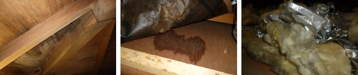 雨漏りによる屋内への影響(木材や断熱材の腐食)